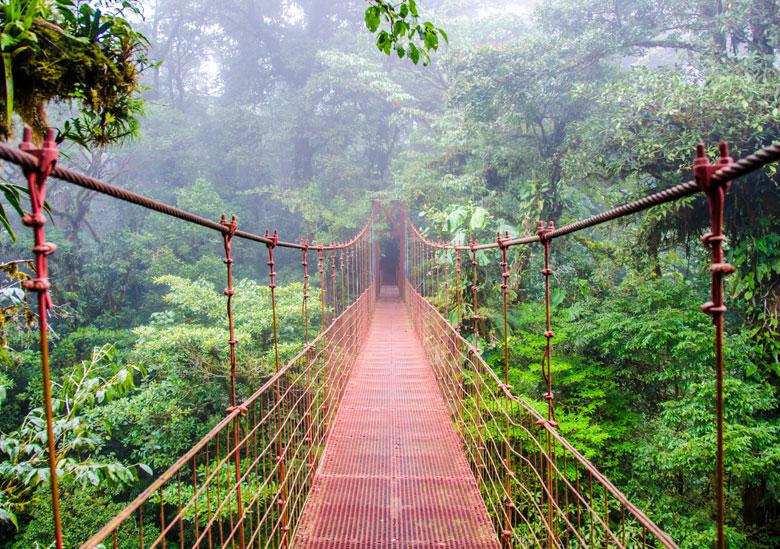 pont-forêt-costa-rica